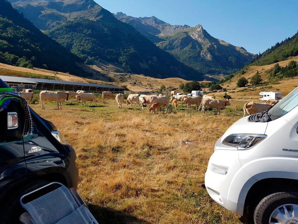 vacas en el valle de Ossau con autocaravana en primer plano